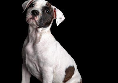 01-colonphoto.com-professional-Boston-dog-photographer-2