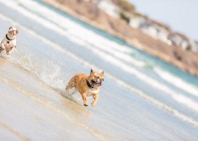 01-colonphoto.com-professional-Boston-dog-photographer-3