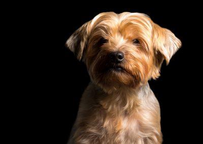 01-colonphoto.com-professional-Boston-dog-photographer