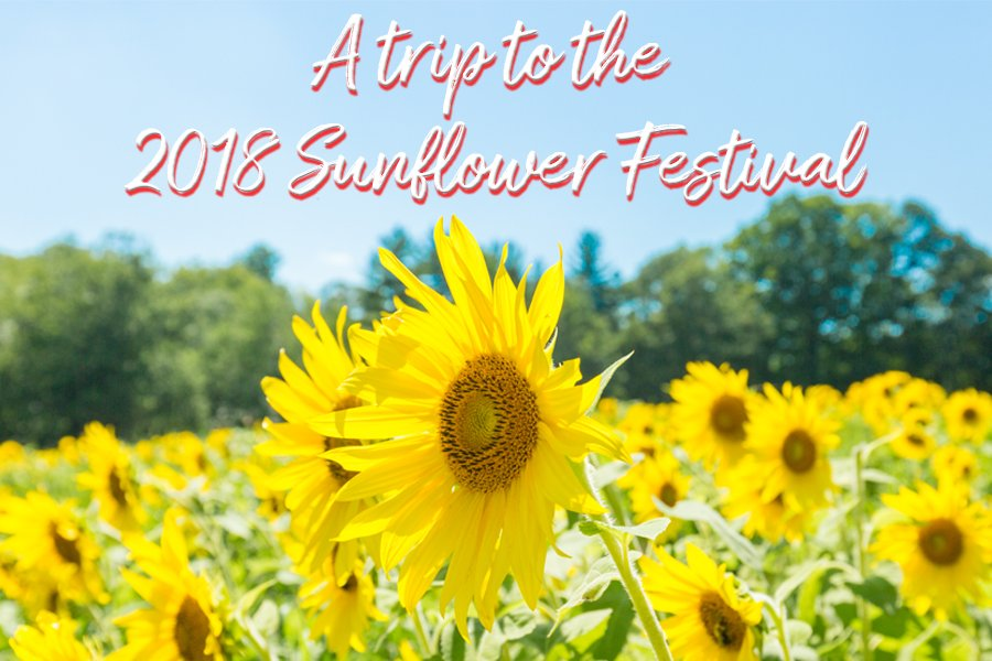 A Trip to the 2018 Sunflower Festival