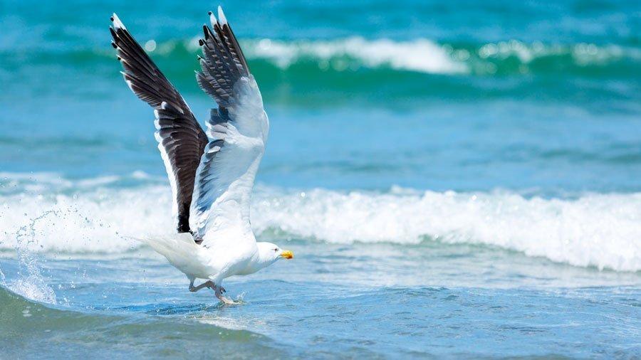 Episode 6: Birding in Nantasket Beach, Hull, MA