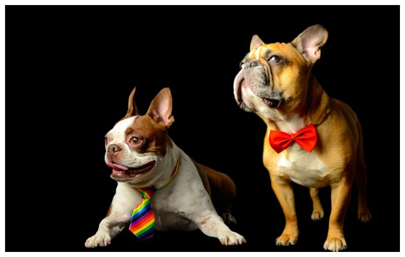 french-bulldog-professional-pet-dog-photographer-new-york-new-jersey-v4