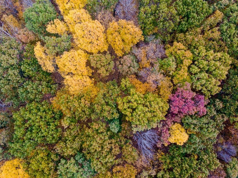 Peak foliage upstate New York during the autumn fall season aerial drone photo