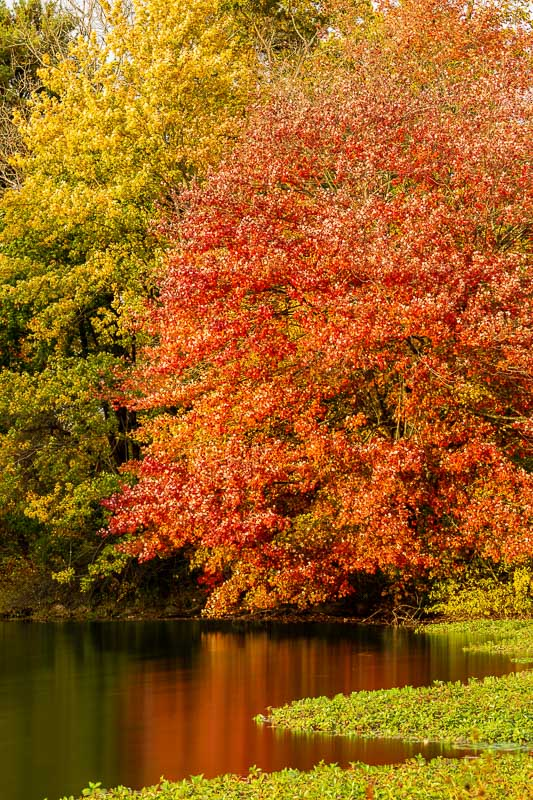 foliage autumn season Verona Park in New Jersey montclair photography art