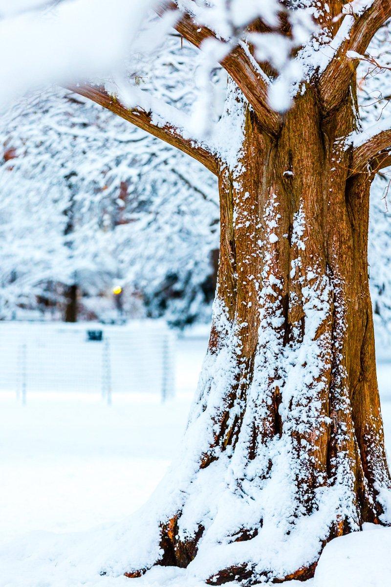 boston common frozen tree snow