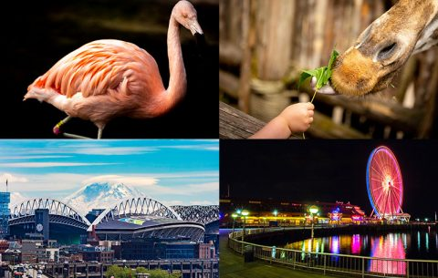 Seattle Part 5/5: My overall review of Seattle and a final stop to the Woodland Park Zoo.