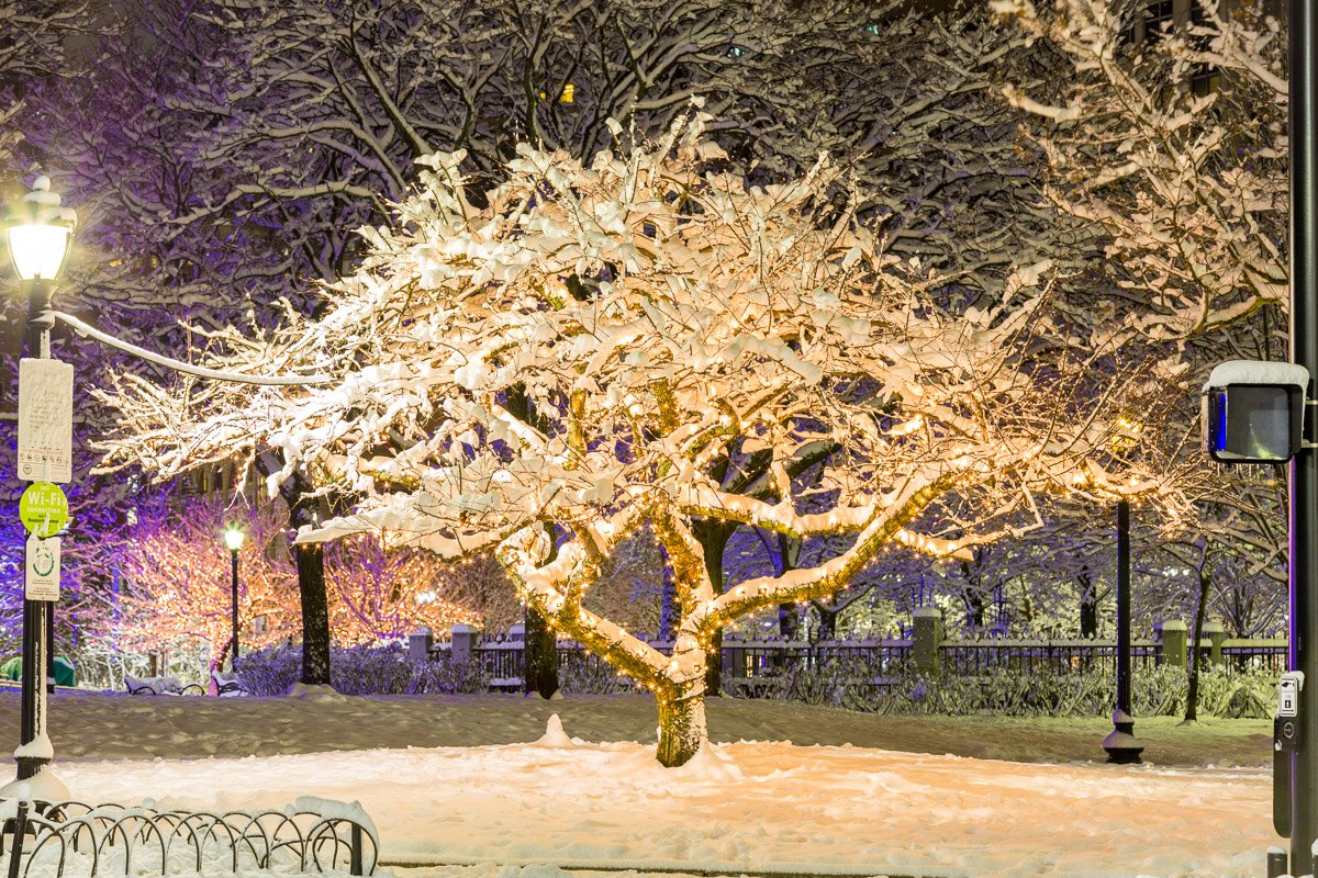 frozen boston winter trees night phot